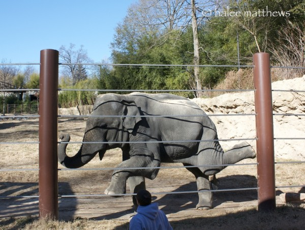 blog_elephant dance1