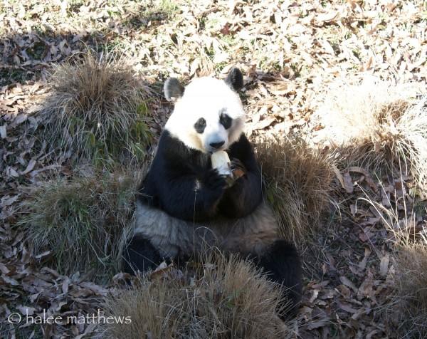 blog_panda snack1